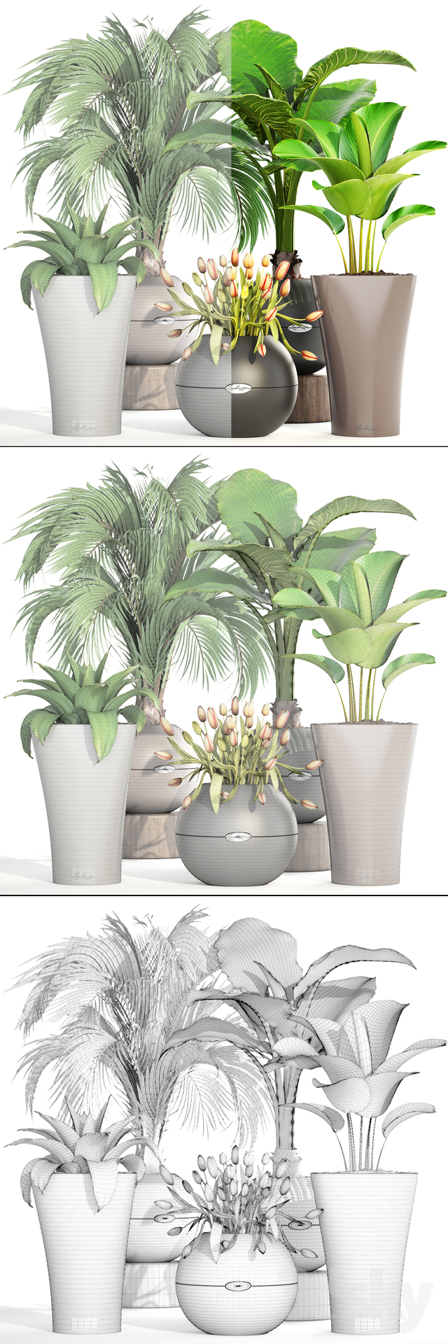 Collection Of Plants 191.