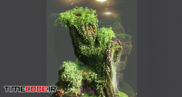 Dwarf Florarium