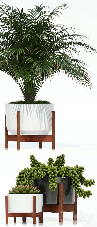 Plants Collection 68 Modernica Pots