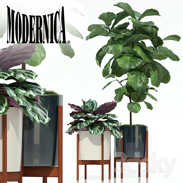 Plants Collection 69 Modernica Pots