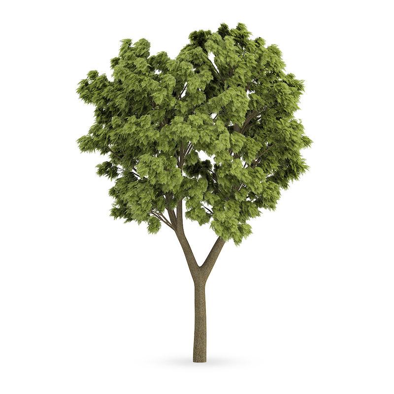 CGAxis Models Volume 62 3D Trees VI