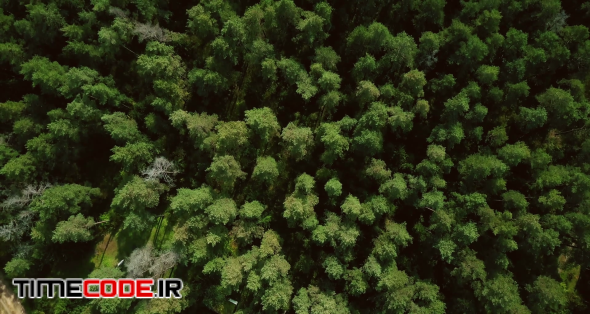 Drone flying forward above beautiful green forest. Aerial 4K flyover topview shot of early autumn treetops.