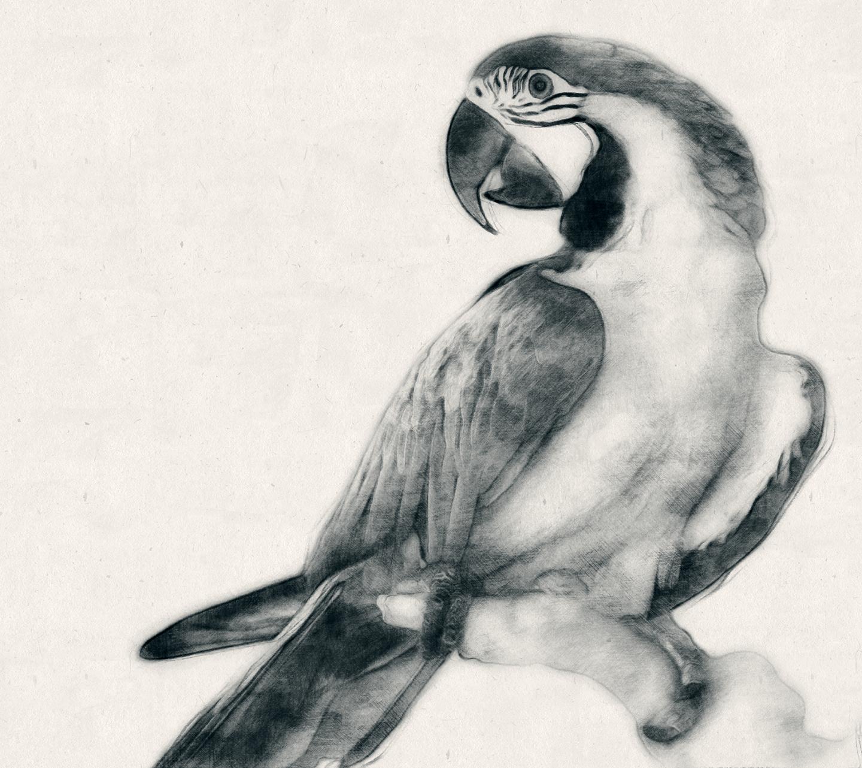 Charcoal Sketch CS3+ Photoshop Action
